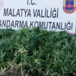 Jandarma Uyuşturucuya Geçit Vermiyor