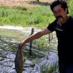 Göletteki balıklar ölmeye başladı