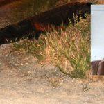 Hekimhan'da Kavga: 1 Ölü